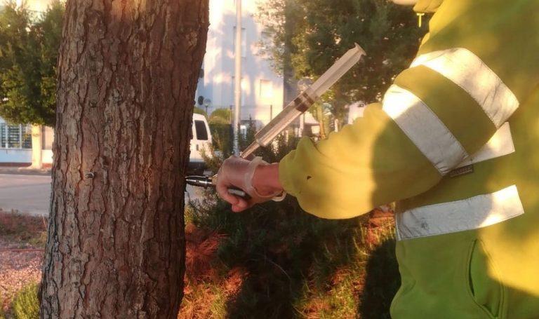 Medio Ambiente comienza el tratamiento de pinos contra la procesionaria en la Vila