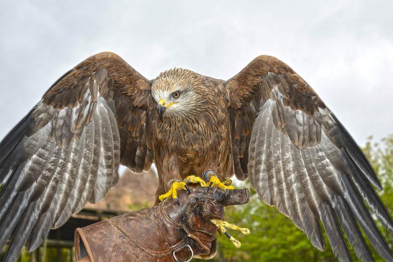 Nuevas rapaces se incorporan a las demostraciones educativas en Terra Natura Benidorm